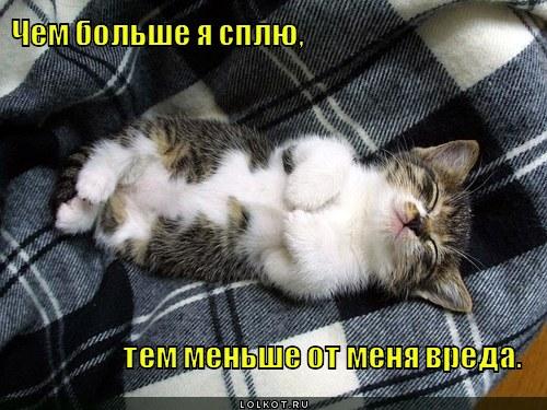 http://lolkot.ru/wp-content/uploads/2012/01/menshe-vreda_1326656115.jpg