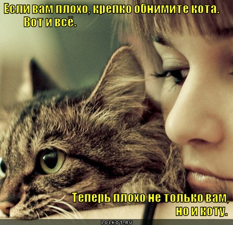 http://lolkot.ru/wp-content/uploads/2012/01/obnimite-kota_1326373561.jpg