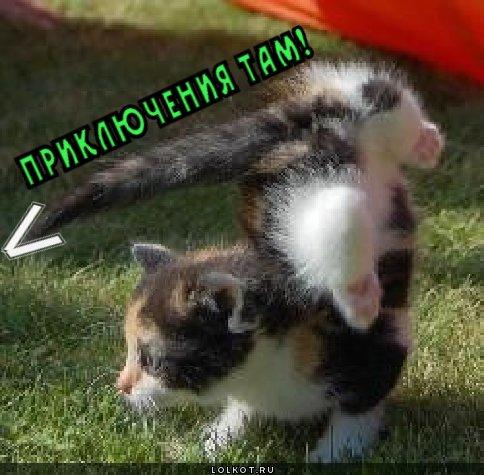 http://lolkot.ru/wp-content/uploads/2012/01/priklyucheniya-tam_1326688084.jpg