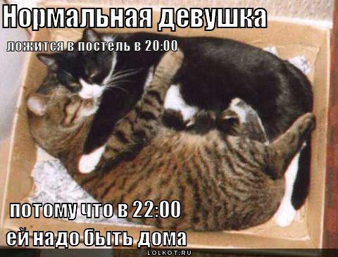 приколы кошки.