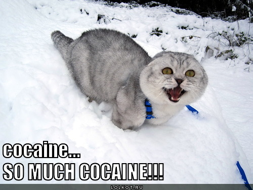 so-much-cocaine_1330321181.jpg