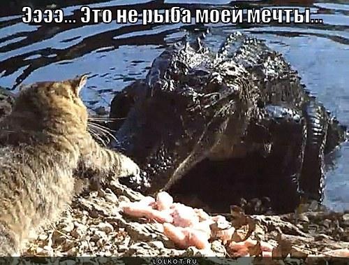 ne-ryba-moyey-mechty_1331583733.jpg