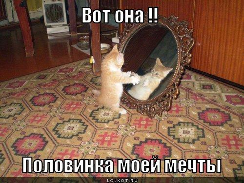 polovinka-mechty_1335523958.jpg