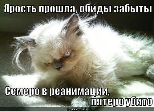 http://lolkot.ru/wp-content/uploads/2012/04/yarost-proshla_1333341871.jpg