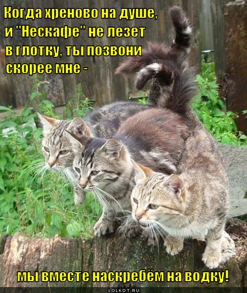 hrenovo-na-dushe_1339039479.jpg