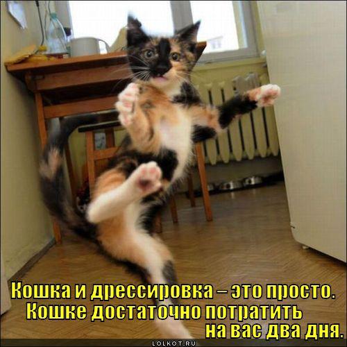 koshka-i-dressirovka_1338872710.jpg