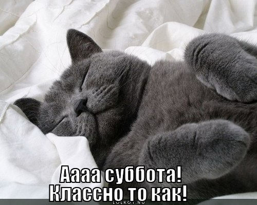 http://lolkot.ru/wp-content/uploads/2012/06/subbota_1339935045.jpg