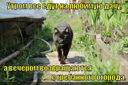 https://lolkot.ru/wp-content/uploads/2012/06/utrom-na-dachu_1338872969.jpg