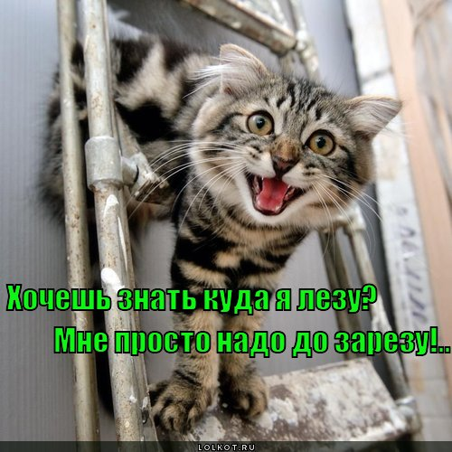 hochesh-znat-kuda-ya-lezu-mne-prosto-nad