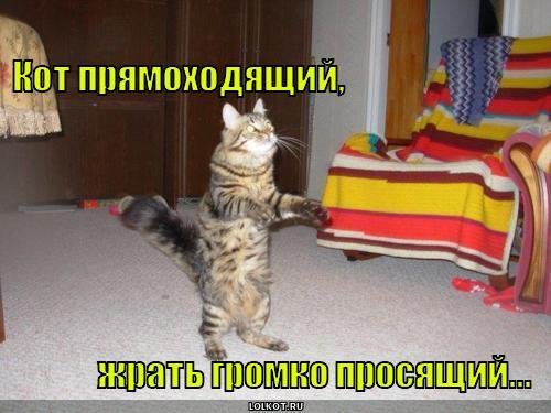 kot-pryamohodyaschiy_1343656182.jpg