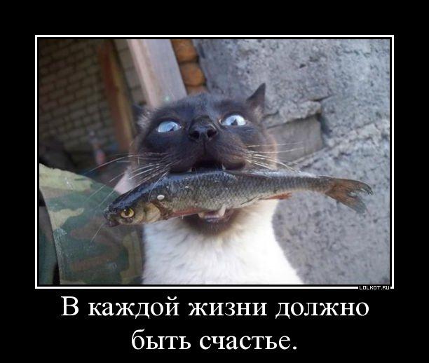 http://lolkot.ru/wp-content/uploads/2012/08/dolzhno-byt-schaste_1344768561.jpg