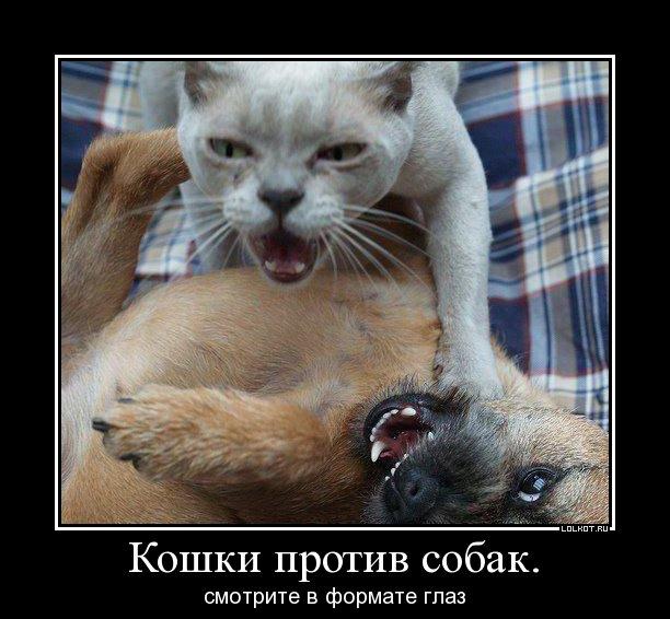 Кошки против собак смотрите в формате