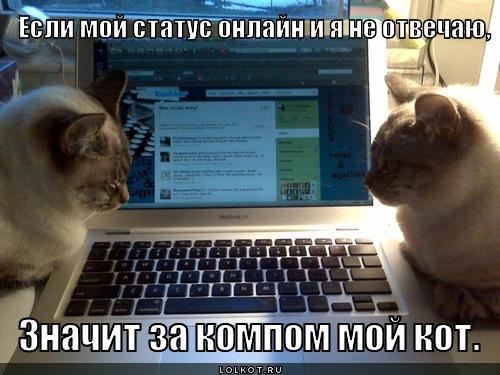 kot-onlayn_1345530359.jpg