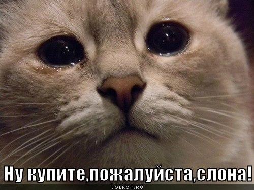 http://lolkot.ru/wp-content/uploads/2012/08/kupi-slona_1344603486.jpg