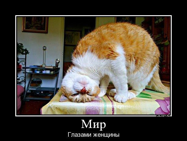 mir-glazami-zhenschiny_1344250866.jpg