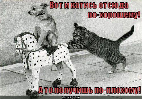 po-horoshemu_1346223449.jpg