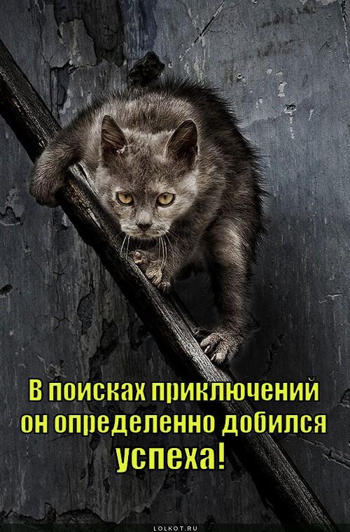 v-poiskah-priklyucheniy_1343887665.jpg