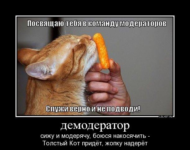 приколы картинки фото: