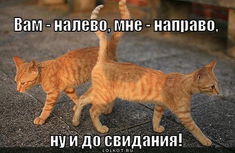 http://lolkot.ru/wp-content/uploads/2012/09/nu-i-do-svidaniya_1347979475.jpg