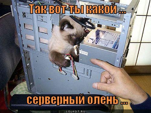 servernyy-olen_1348202117.jpg