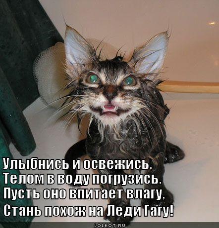 http://lolkot.ru/wp-content/uploads/2012/09/ulybnis-i-osvezhis_1348147904.jpg
