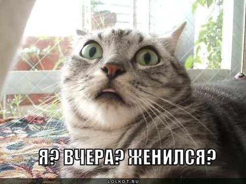 zhenilsya_1346521822.jpg