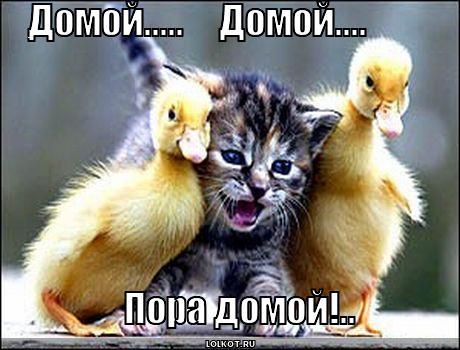 http://lolkot.ru/wp-content/uploads/2012/10/domoy_1349859518.jpg