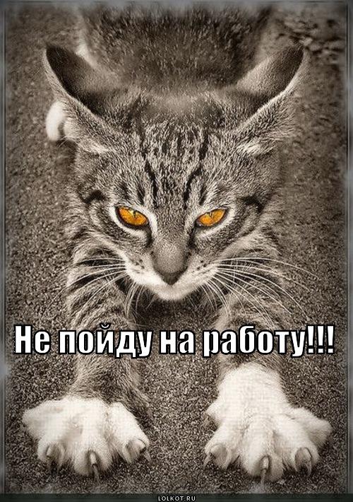 почему кот ходит с высунутым языком