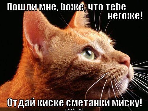 smetanki-misku_1349842511.jpg