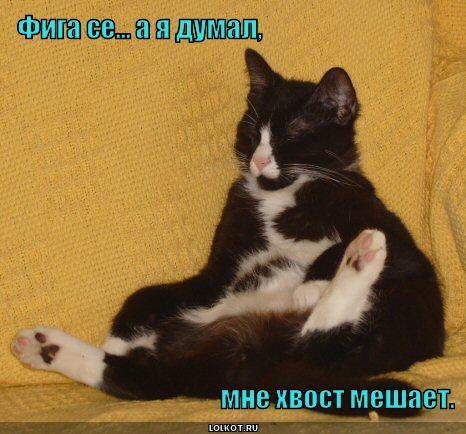 hvost-meshayet_1354030634.jpg