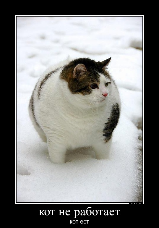 Кот не работает кот ест