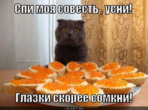 moya-sovest_1352395286.jpg