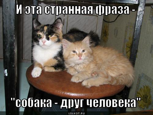 strannaya-fraza_1353830426.jpg