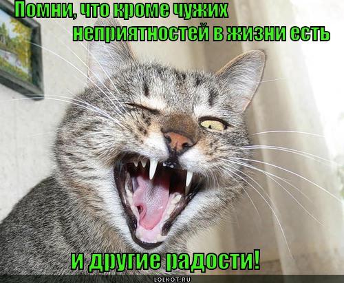 vsyakiye-radosti_1353789951.jpg
