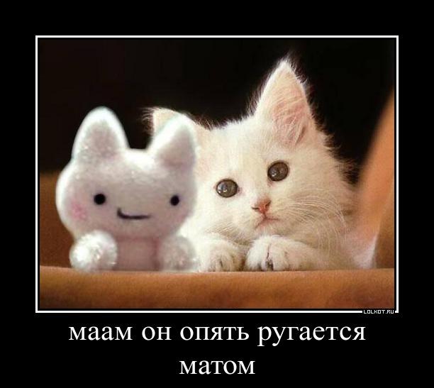 cat antihistamine