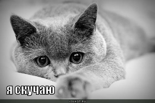 говорящий котик и