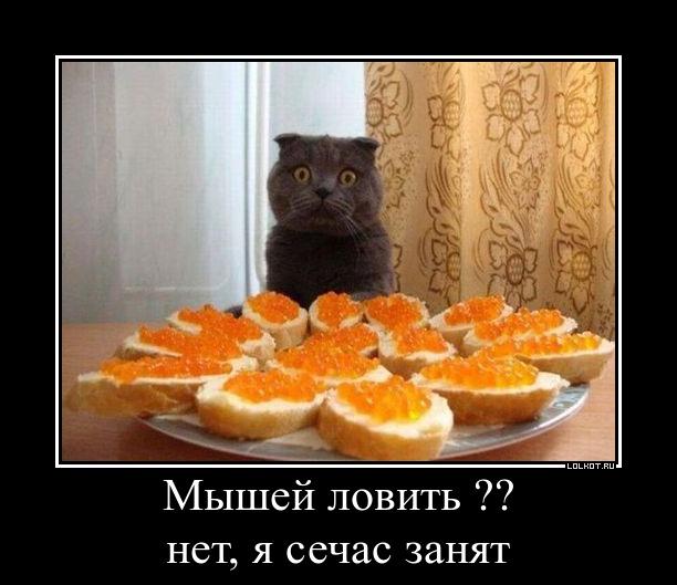 zanyat_1354876044.jpg