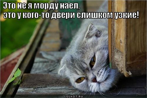 dveri-vs-morda_1358330449.jpg