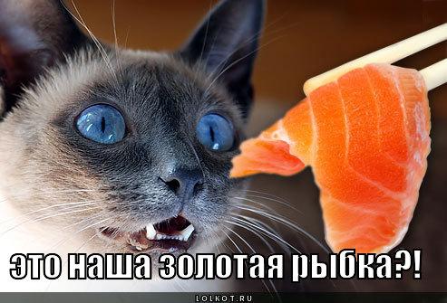 eto-nasha-zolotaya-rybka_1357660365.jpg