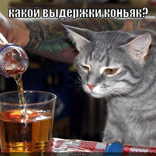 Картинки по запросу котик коньяк