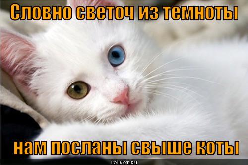 svetoch_1357052426.jpg