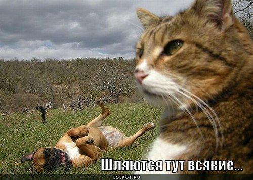 shlyayutsya-tut-vsyakiye..._1360576077.j
