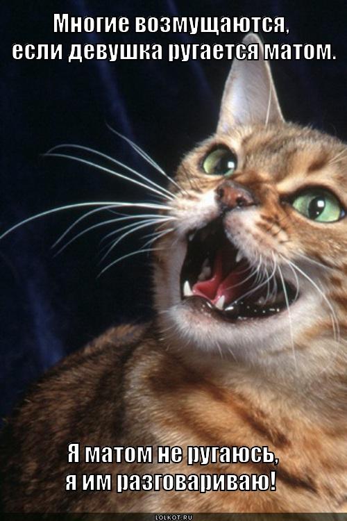 коты с матом мемы осознают, что кухня