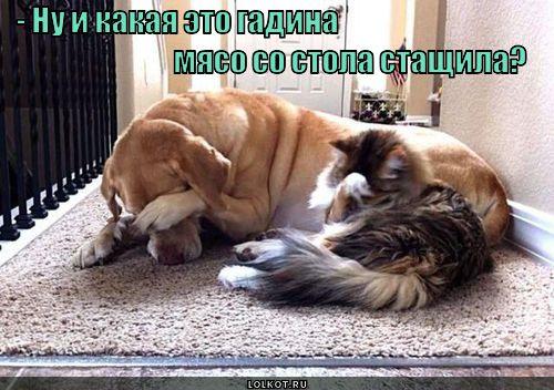 gde-myaso_1362497341.jpg