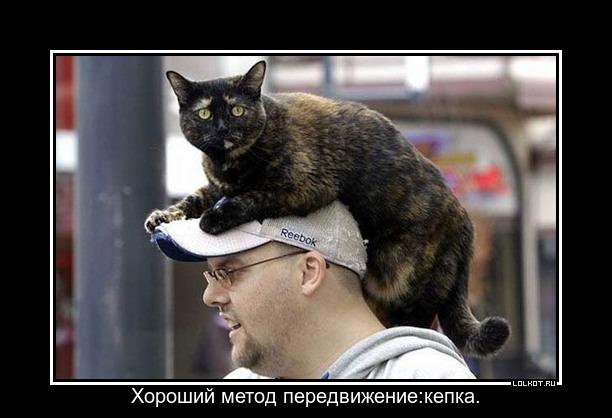 http://lolkot.ru/wp-content/uploads/2013/03/metod-peredvizheniye_1362333420.jpg