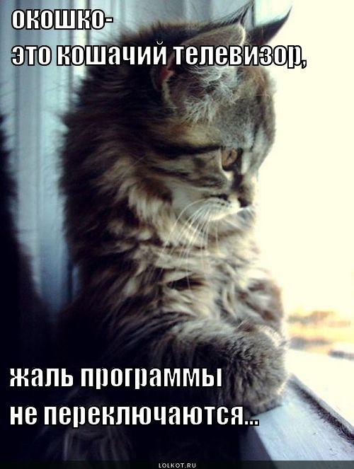 oknotv._1363887413.jpg