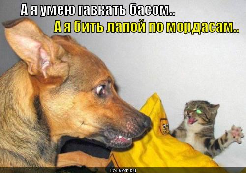 umeyu-vs-mogu._1364744597.jpg