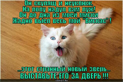 zveryuga_1364123100.jpg
