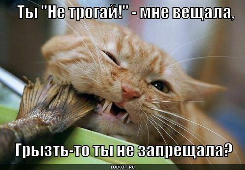 glotok-na-zubok._1366138048.jpg