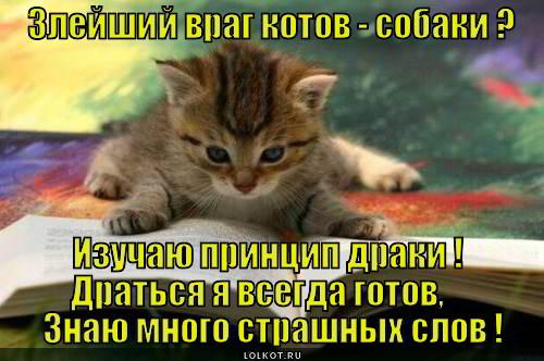 gotov-s-osnov_1365940246.jpg